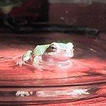 frog1 (8k image)