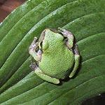 frog3 (8k image)